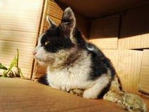 Chat égaré sans abri 4 photo stock