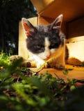 Chat égaré sans abri 5 photo stock