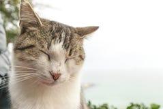 Chat égaré tranquille près de scène paisible de tranquilité de la Bulgarie de balchik de bord de mer Photo libre de droits