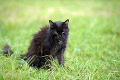 chat émacié par malade très vieux Photo stock