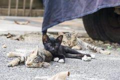 Chat étendu sur le plancher Photos stock