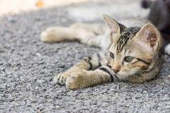 Chat étendu sur le plancher Photographie stock