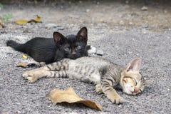 Chat étendu sur le plancher Image libre de droits
