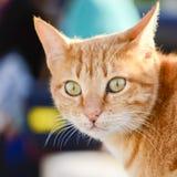 chat étonné Image libre de droits