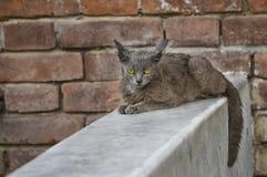 Chat étranger avec les yeux tristes se reposant sur un parapet contre le mur de briques images stock