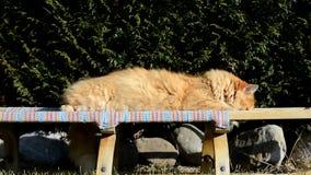 Chat éveillé de gingembre se trouvant sur le jardin banque de vidéos