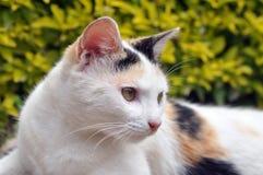 chat images libres de droits