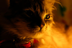 Chat Photos stock