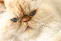 Chat photo stock