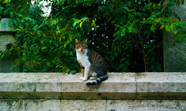 Chat Photographie stock libre de droits