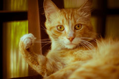 Chat Photographie stock