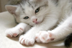 Chat Photos libres de droits