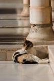 chat photographie stock libre de droits