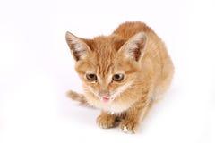chat Photos libres de droits