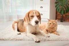 Chat adorable et chien se trouvant sur la couverture à la maison Image stock