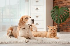 Chat adorable et chien se trouvant sur la couverture à la maison photographie stock