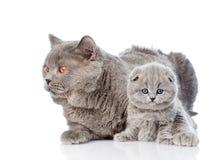 Chat adulte de mère étreignant un chaton nouveau-né D'isolement sur le blanc Photographie stock