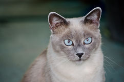 Chat amical Photographie stock