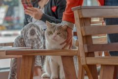 Chat amical et personnes amicales photographie stock