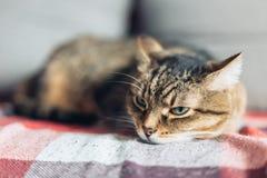 Chat amical tigré de Brown se trouvant sur le divan photo stock