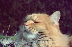 Chat assez heureux et fier Photo stock
