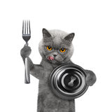 Chat attendant de la nourriture photo stock