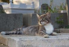 Chat au cimetière d'Eyup Photographie stock