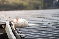 Chat au-dessus du toit Image libre de droits