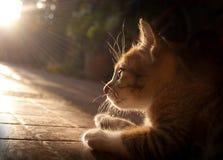 Chat au soleil Image libre de droits