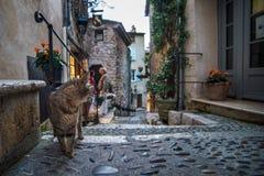 Chat aux vieux steets du saint Paul de Vence Photo libre de droits