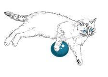 Chat aux yeux bleus. Images stock