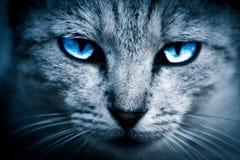 Chat aux yeux bleus Photos stock