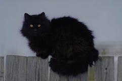 chat aux yeux d'insectes sur la barrière Photo stock