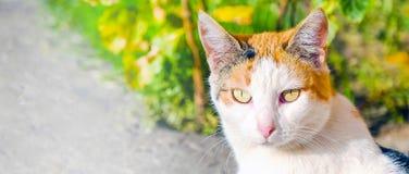 Chat aux yeux grands avec du charme appréciant le soleil Portrait d'un chat regardant directement dans l'appareil-photo image libre de droits