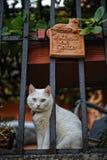 chat aux yeux impairs à Florence, Italie images libres de droits