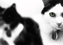 Chat aux yeux verts Photographie stock libre de droits