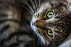 Chat aux yeux verts Photos stock