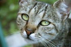 Chat avec de beaux yeux Photos stock