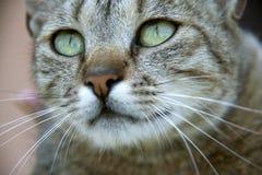 Chat avec de beaux yeux Photographie stock