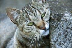 Chat avec de beaux yeux Images stock