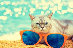 Chat avec de grandes lunettes de soleil sur la plage Photos stock