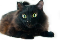 Chat avec de grands yeux Photo stock
