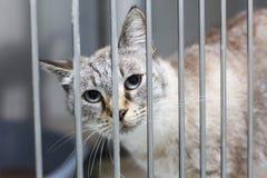 Chat avec de grands yeux dans une cage image stock