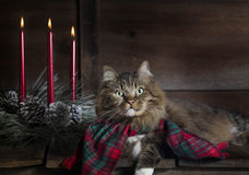 Chat avec des bougies d'écharpe et de Noël de vacances Image stock