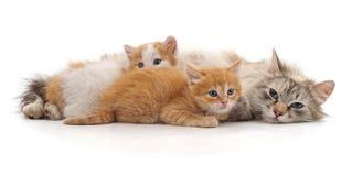 Chat avec des chatons Image libre de droits