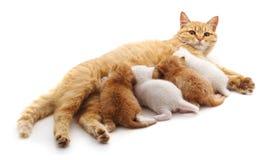 Chat avec des chatons Photographie stock libre de droits