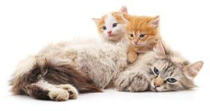 Chat avec des chatons Photos libres de droits