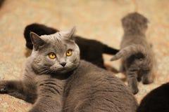 Chat avec des chatons sur le sofa photos libres de droits