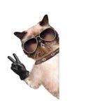 Chat avec des doigts de paix dans les gants en cuir noirs images stock