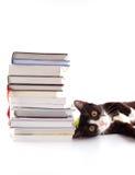 Chat avec des livres Images stock